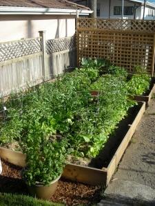 our year one backyard garden