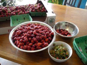 shucking & sorting berries