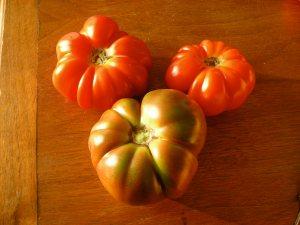 costoluto & cherokee purple tomatoes