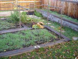 backyard cover crops