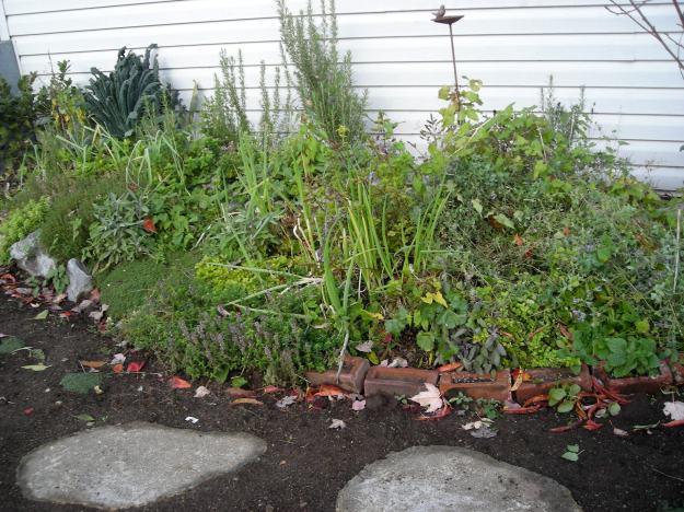 herb garden after a hair cut