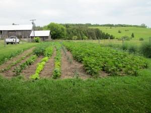grandmas vegetable garden