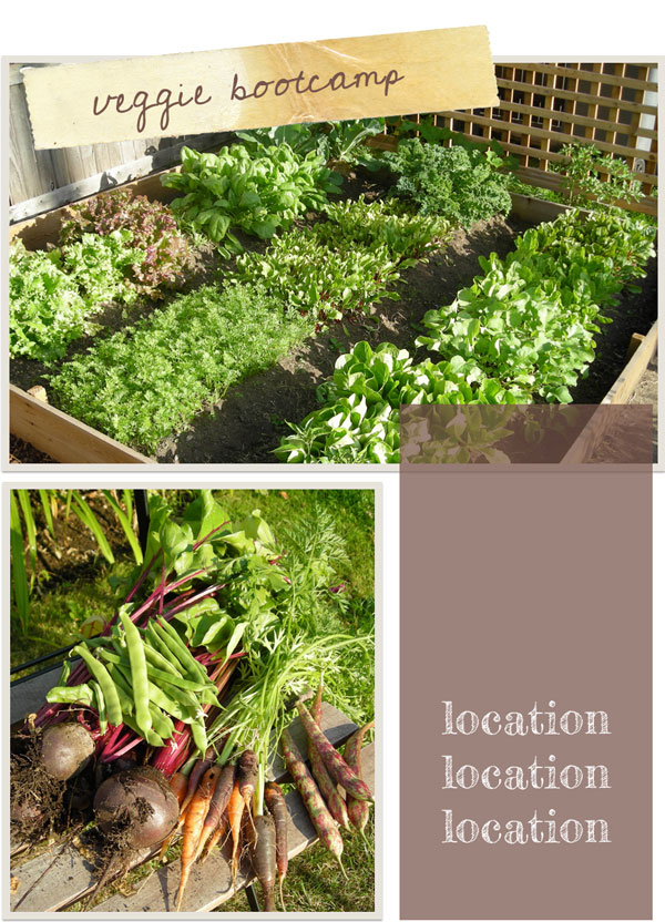 learn to grow organic vegetables selecting garden location