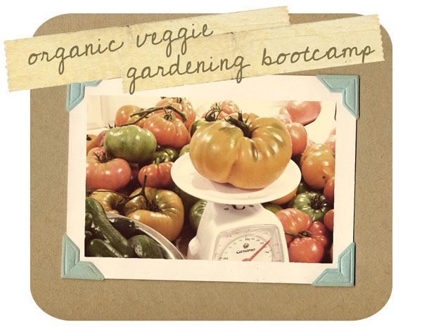 vegetable gardening bootcamp