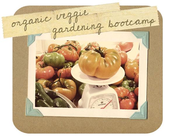vegetable gardening bootcamp