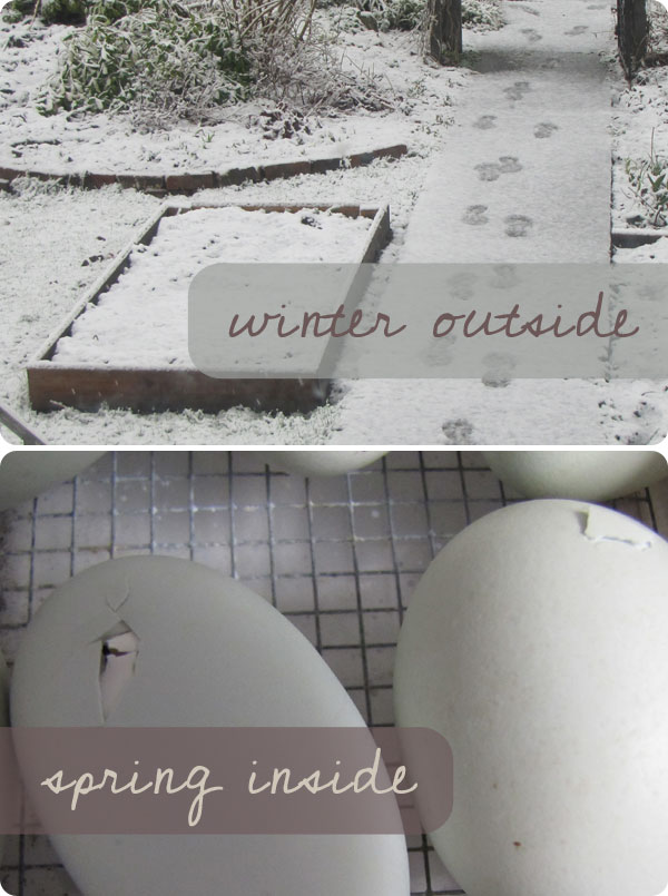 winter outside : spring inside