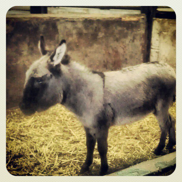 donkey at livestock auction