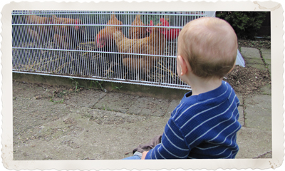 Children and backyard chickens