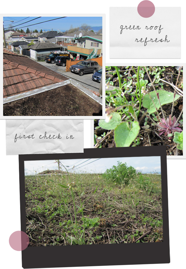 urban green roof refresh
