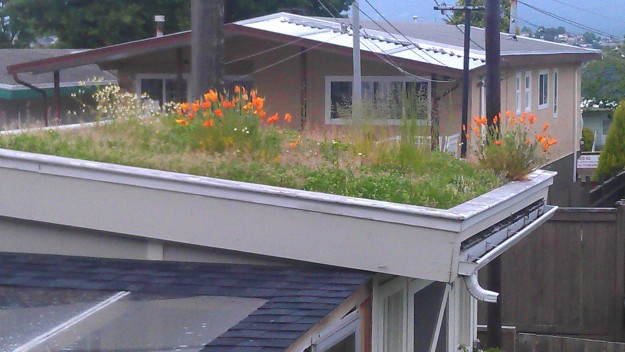 green roof in bloom