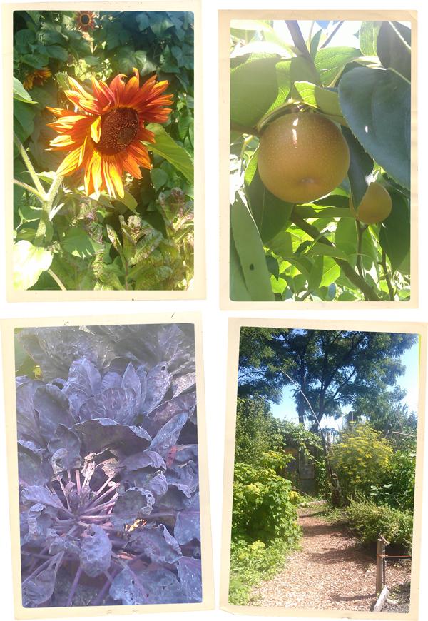 cottonwood community garden vancouver photos