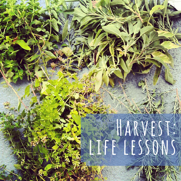 life lessons from the garden