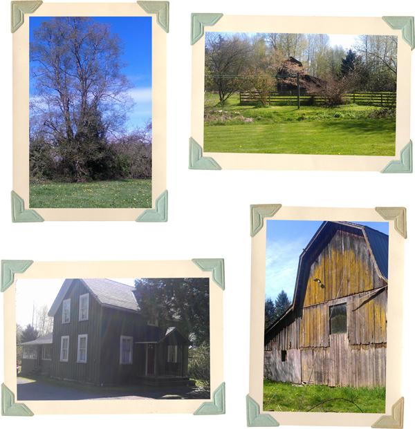 our dream farm