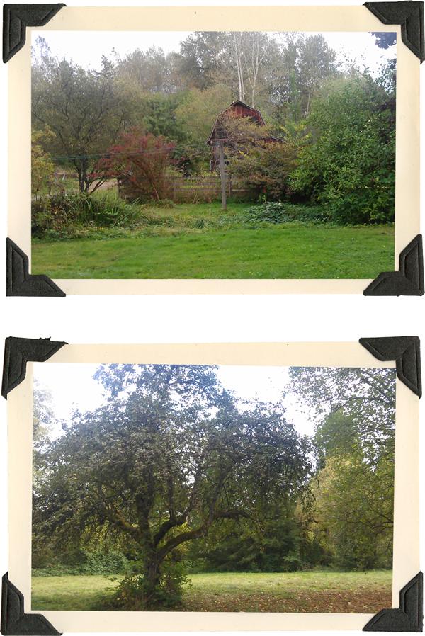barn and apple tree