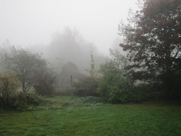 morning mist on the farm
