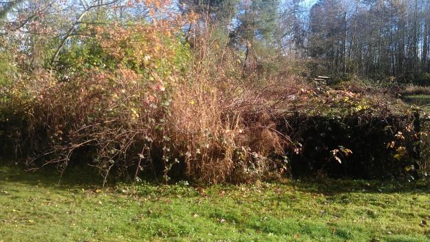 overgrown farm fencerow 2