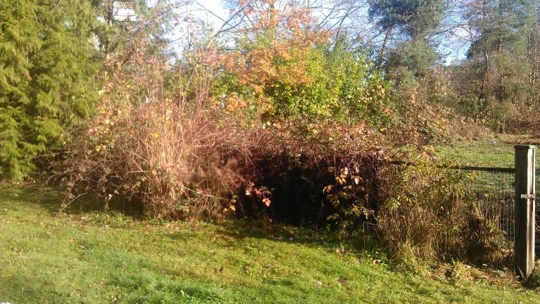 overgrown farm fencerow 1