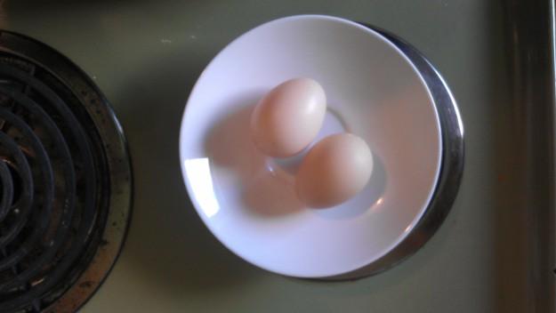 muscovy duck eggs