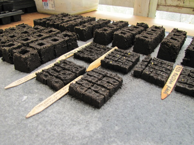 seeds in soil blocks