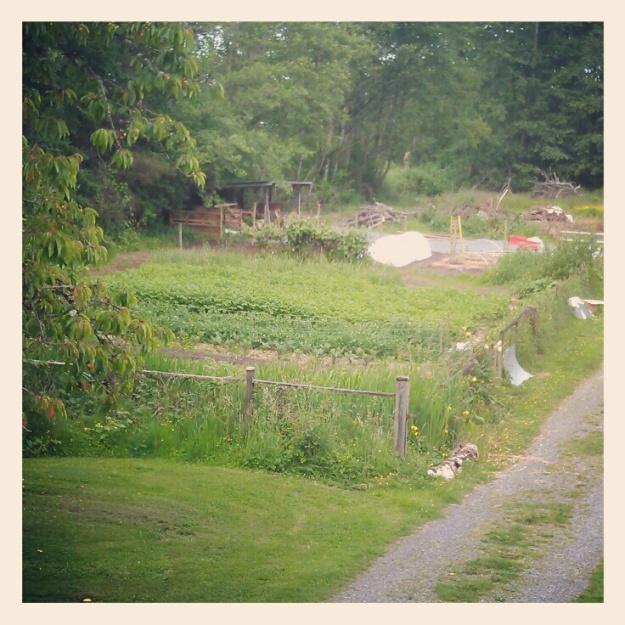 coghlan cottage farm